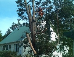 Tree pruning over house